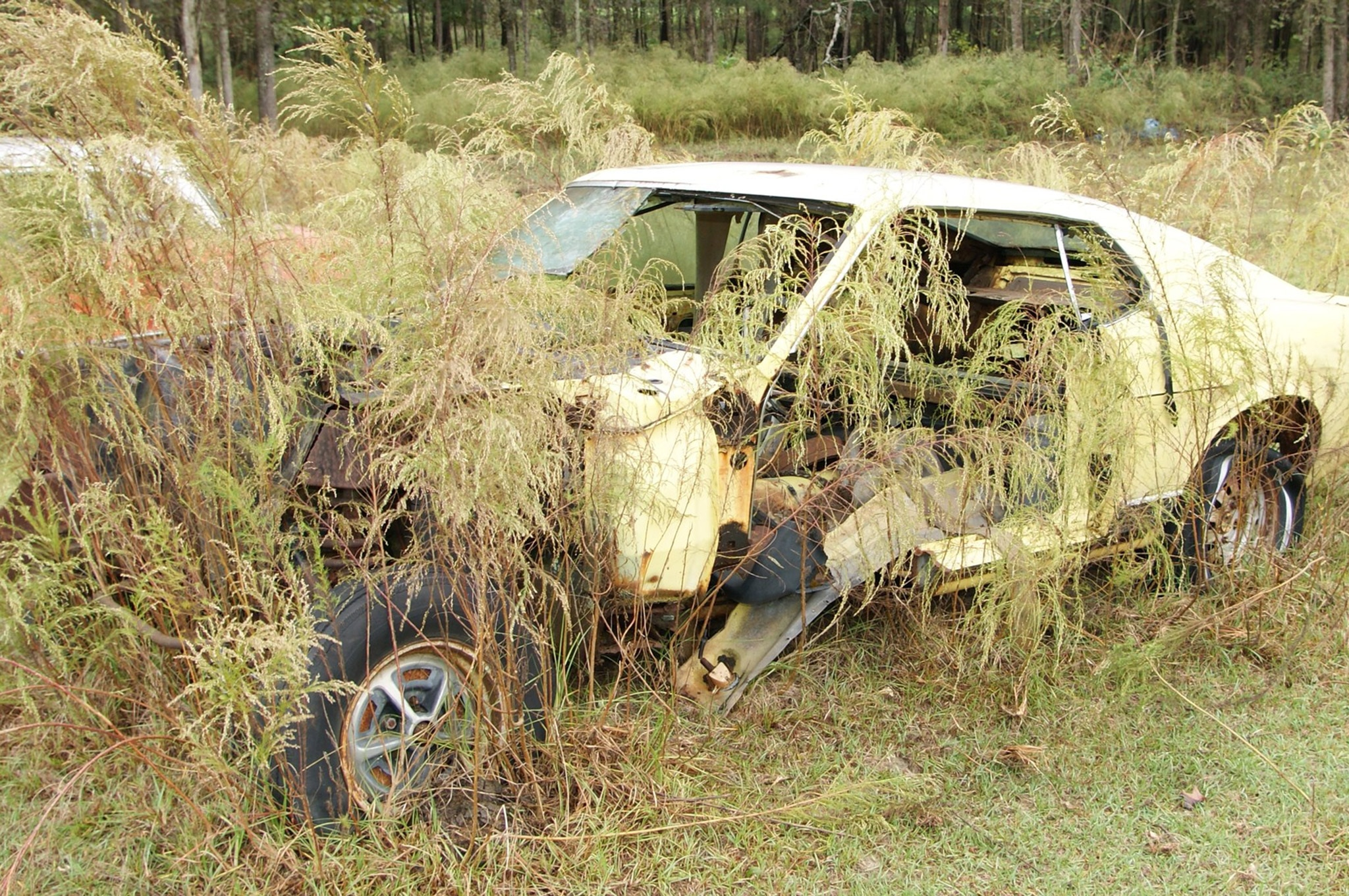 Rare Field Finds Fords Mustangs Trucks Parts 17