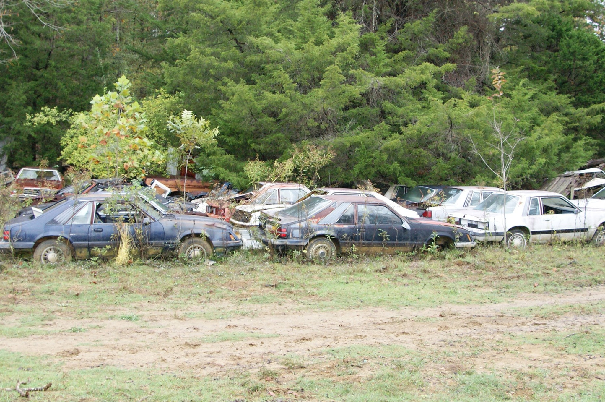 Rare Field Finds Fords Mustangs Trucks Parts 04