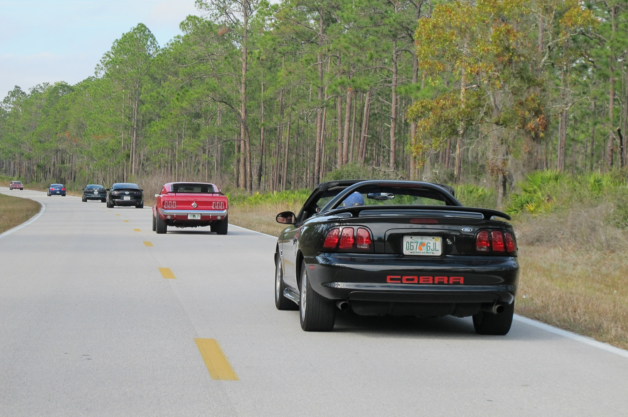 2017 Silver Springs Roundup 007 Pony Trails Cruise Mustang Cobra