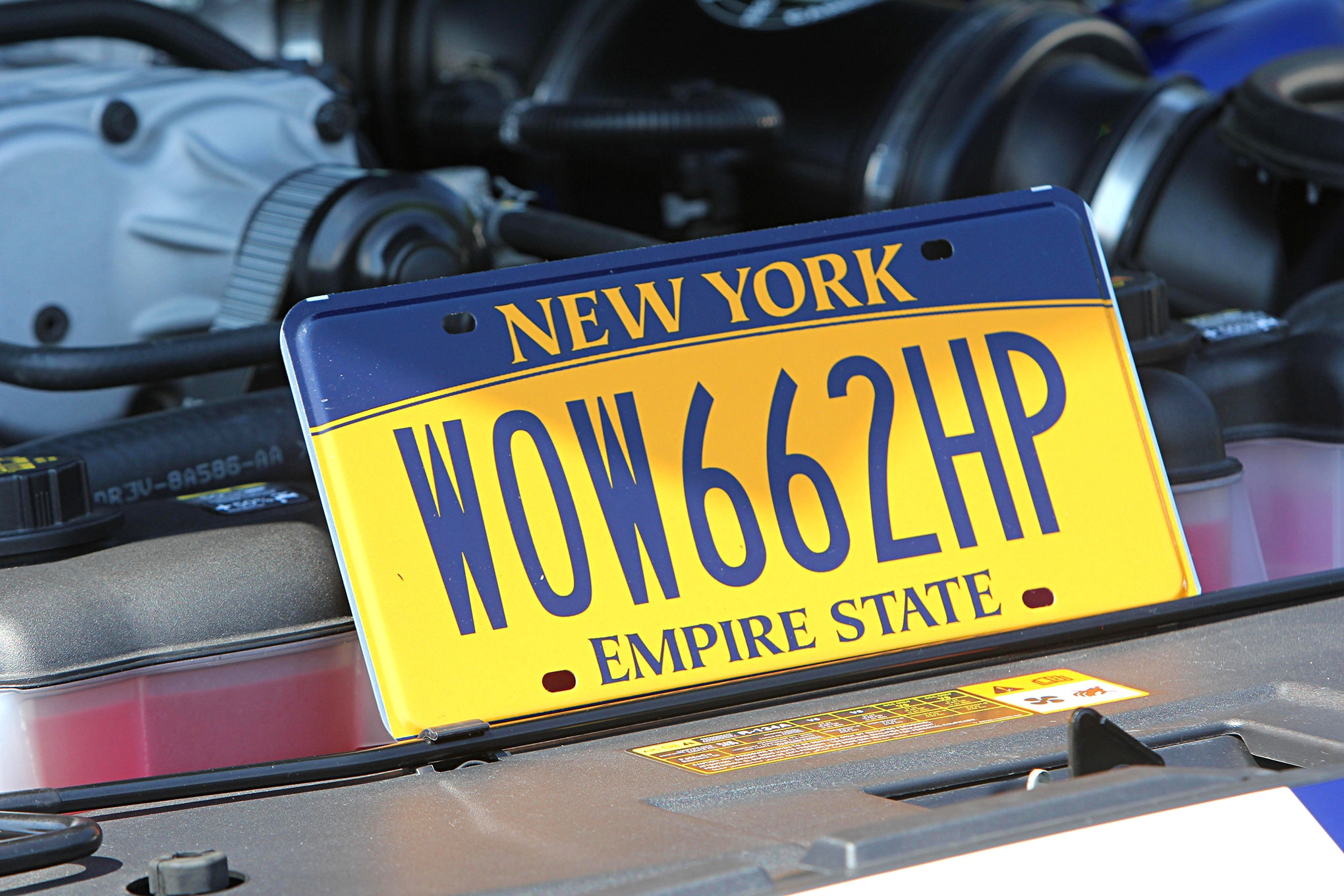 Mustang License Plates 058
