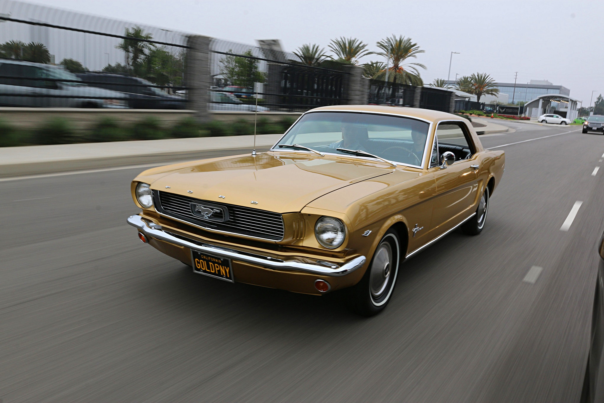 Golden Anniversary Mustang 024