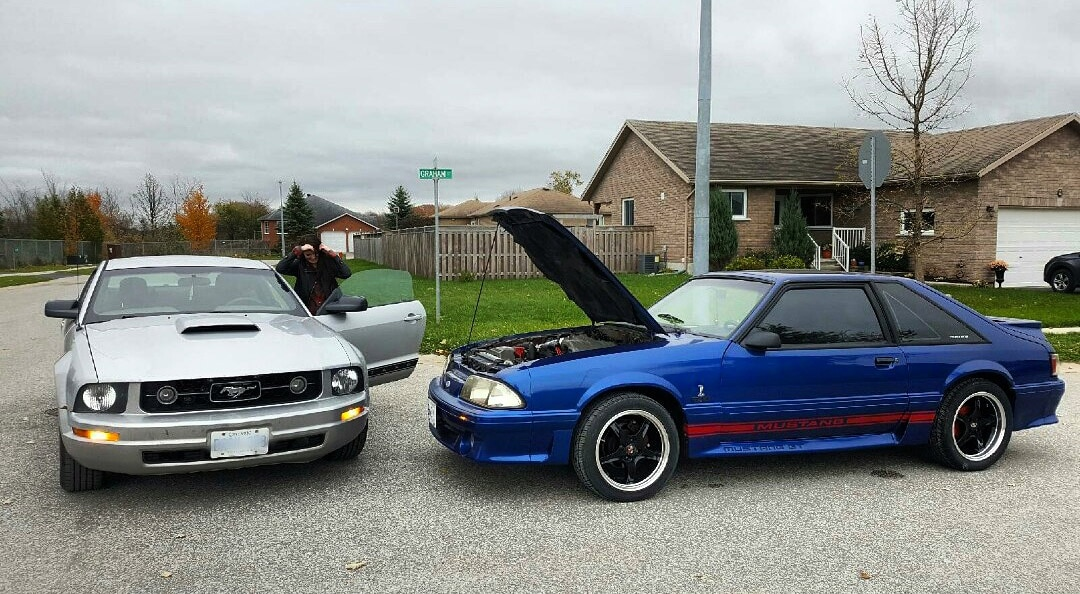 Mustang Girl Monda Rosalie King 003