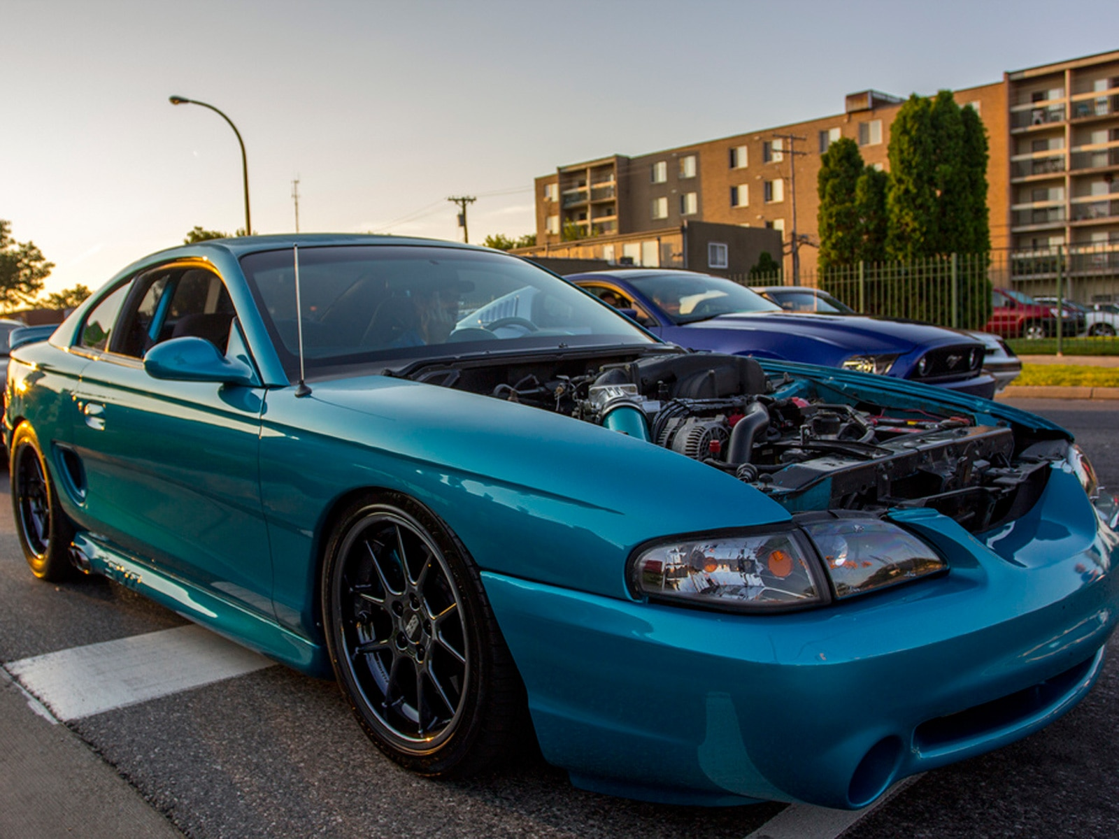 1308 Gallery Photo - Cobra Sn95 Ford Mustang 52911206