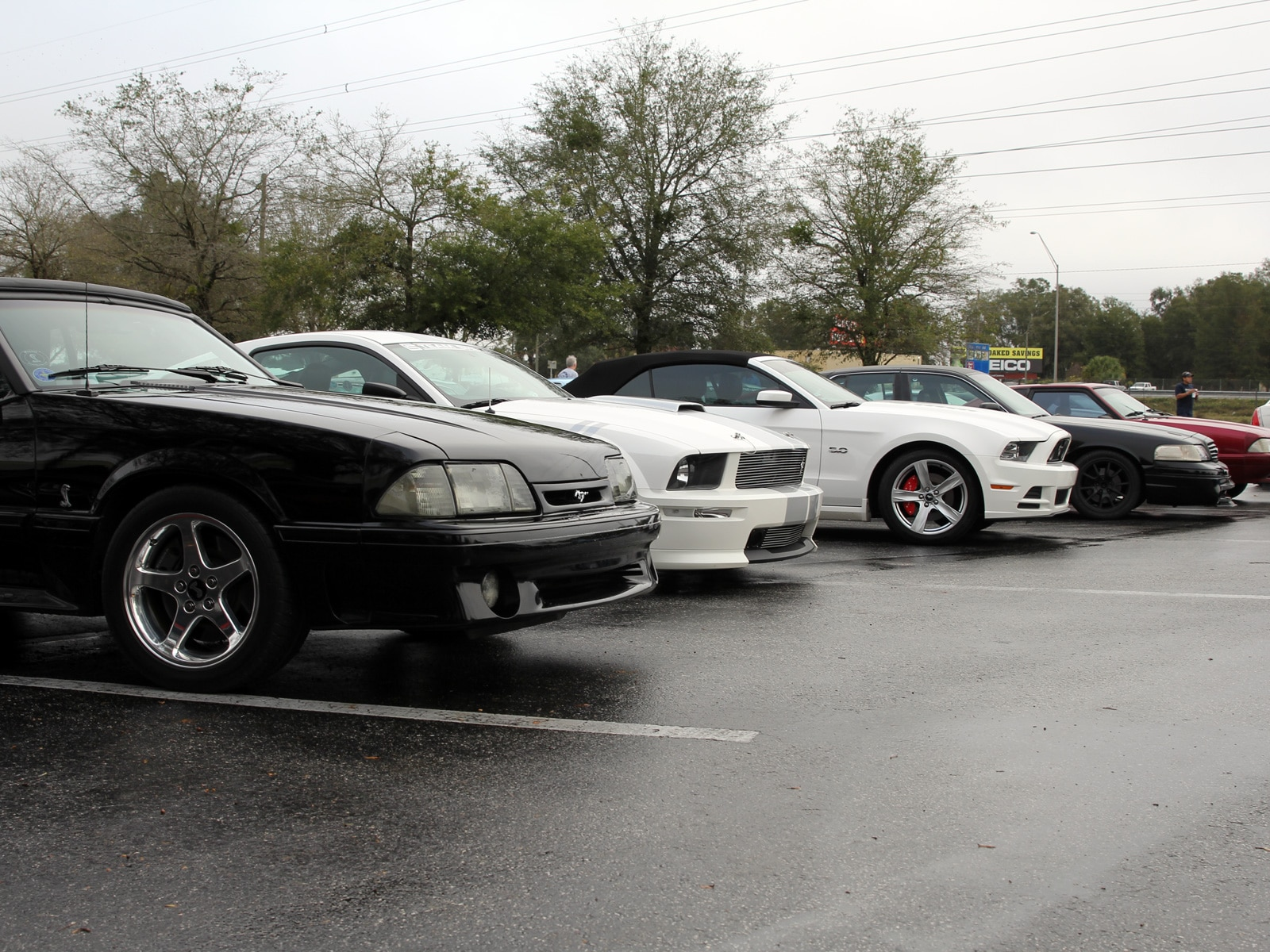 1401 Ford Mustangs Pony Trail Cruise Lineup
