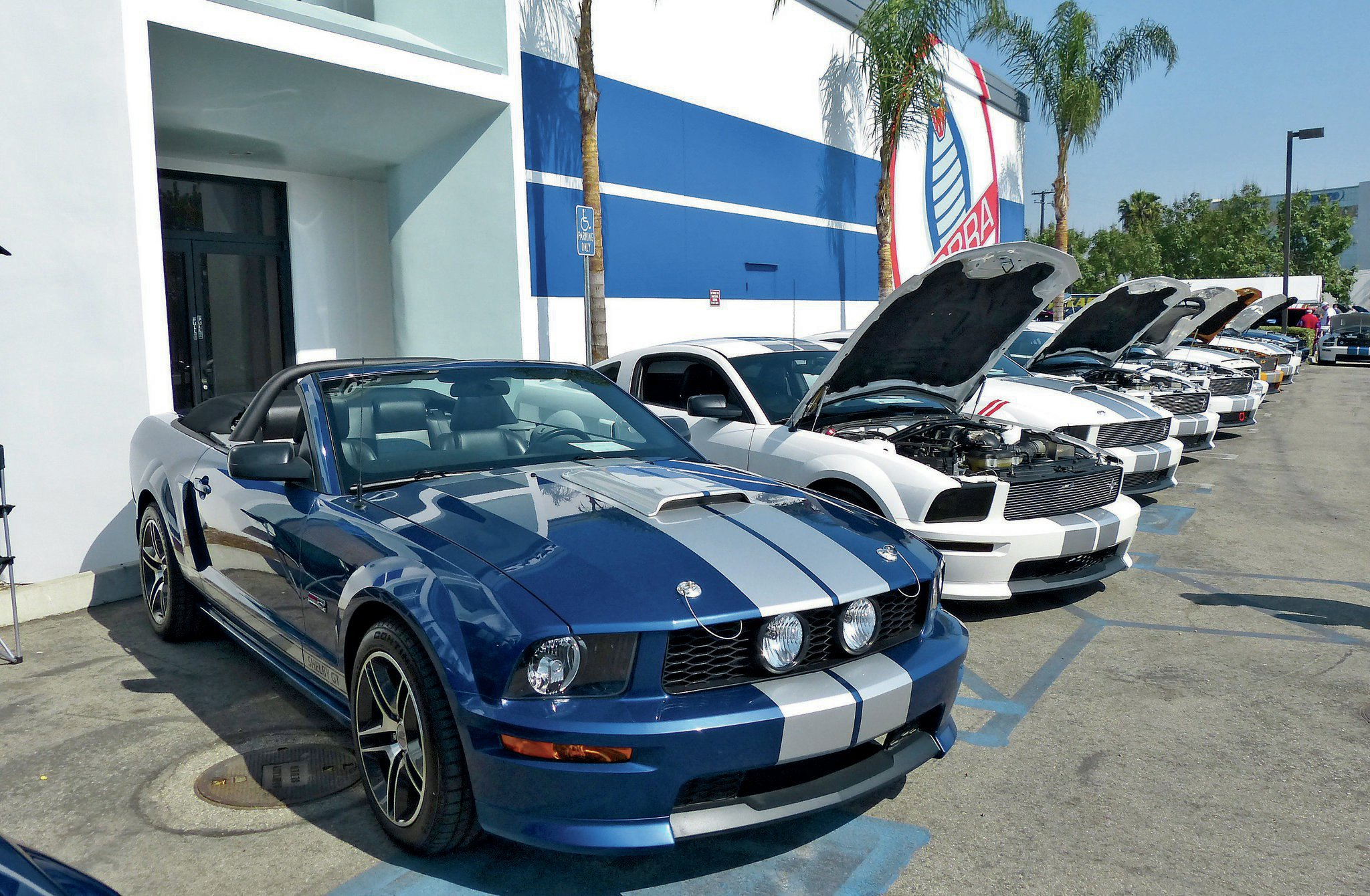 Ford Mustangs Body Style