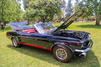 Mustangs In The Park_Stephen Russo 100