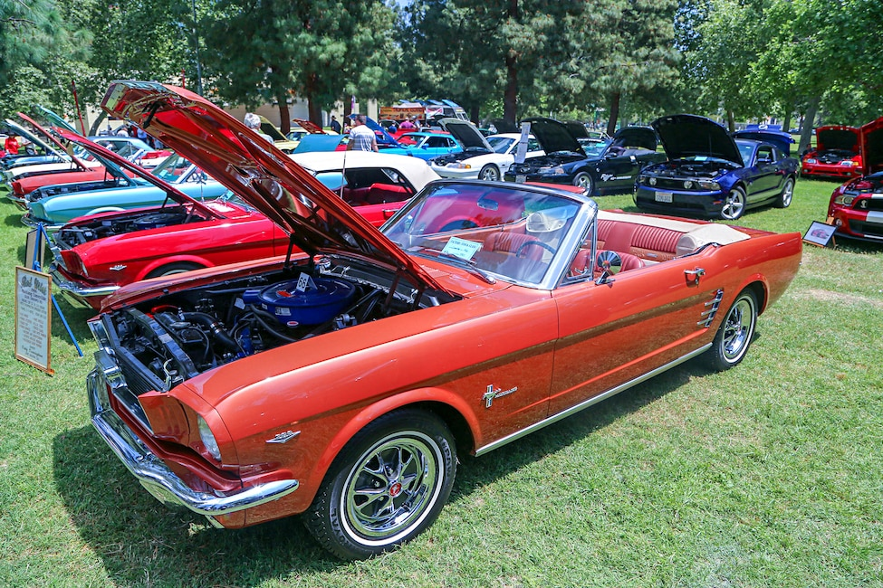 Mustangs In The Park_Stephen Russo 105