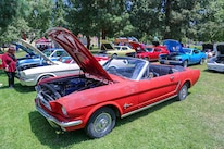Mustangs In The Park_Stephen Russo 115