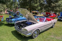 Mustangs In The Park_Stephen Russo 117