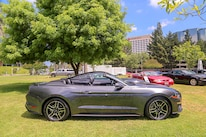 Mustangs In The Park_Stephen Russo 15