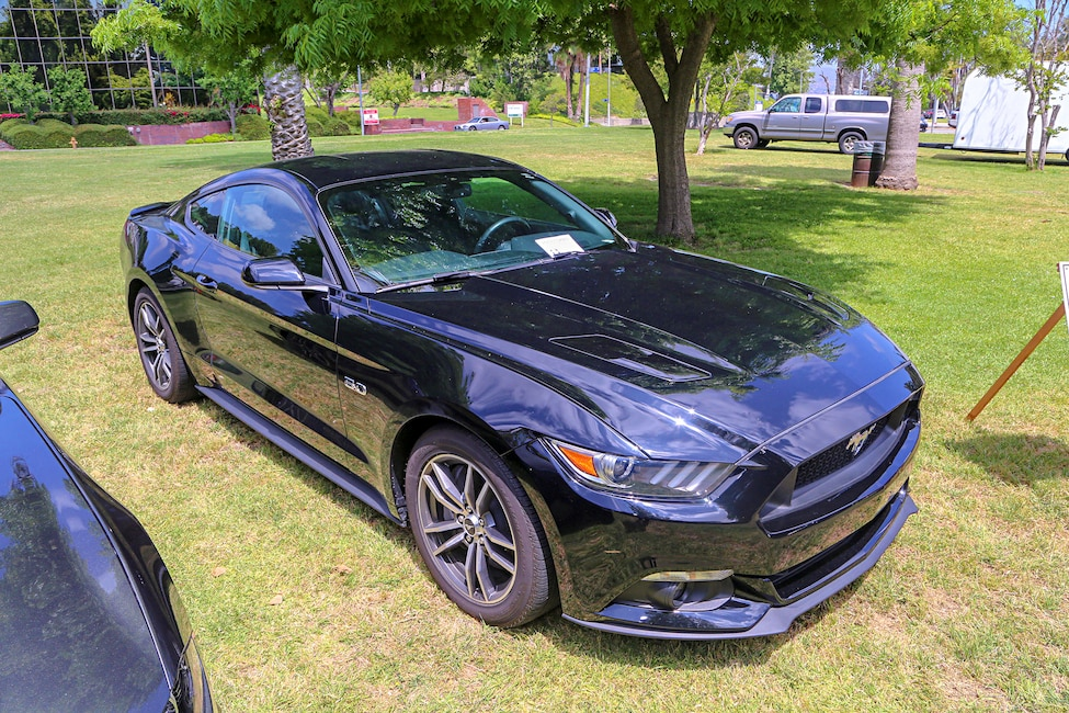 Mustangs In The Park_Stephen Russo 16