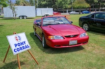 Mustangs In The Park_Stephen Russo 17