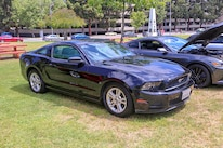 Mustangs In The Park_Stephen Russo 18