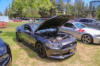 Mustangs In The Park_Stephen Russo 19