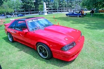 Mustangs In The Park_Stephen Russo 22