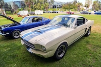 Mustangs In The Park_Stephen Russo 31 2
