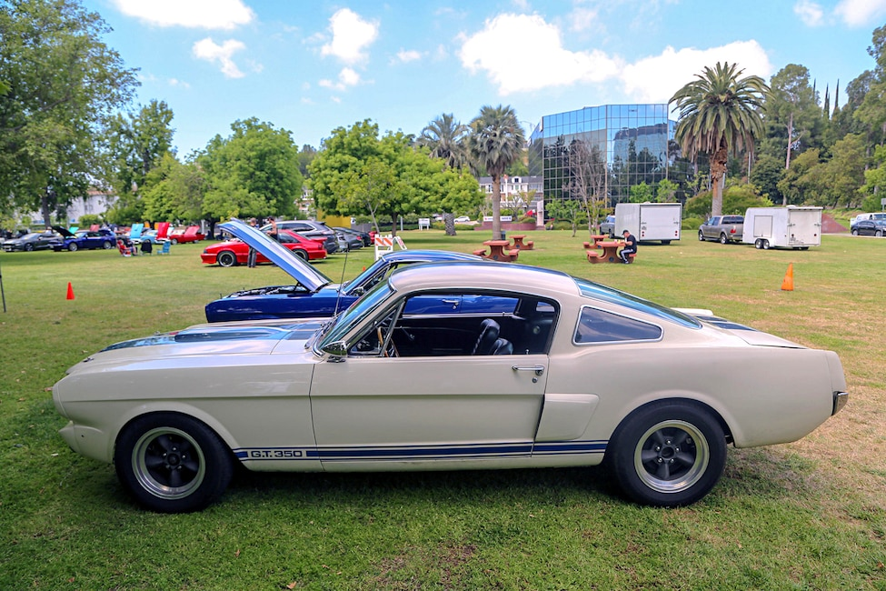 Mustangs In The Park_Stephen Russo 32 2