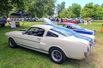 Mustangs In The Park_Stephen Russo 33 2