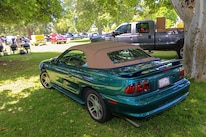 Mustangs In The Park_Stephen Russo 42