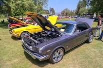 Mustangs In The Park_Stephen Russo 53