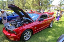 Mustangs In The Park_Stephen Russo 83